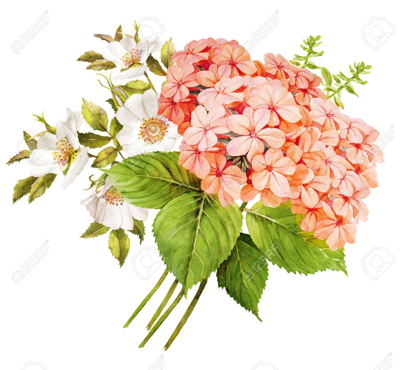 Pink white flower wedding bouquet watercolor hydrangea roses and pink white flower wedding bouquet watercolor hydrangea roses and blue jasmine illustration stok fotoraf mightylinksfo