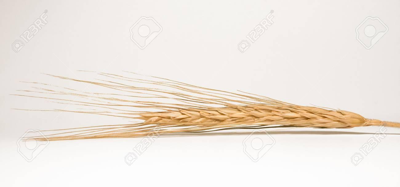 Ripe wheat as a concept of abundance Stock Photo - 4031220