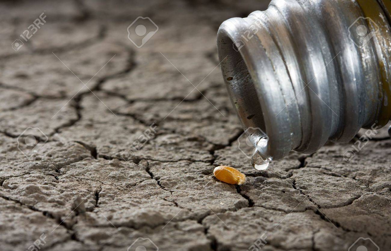 one corn and water drop on drought land as revival concept Stock Photo - 5914091