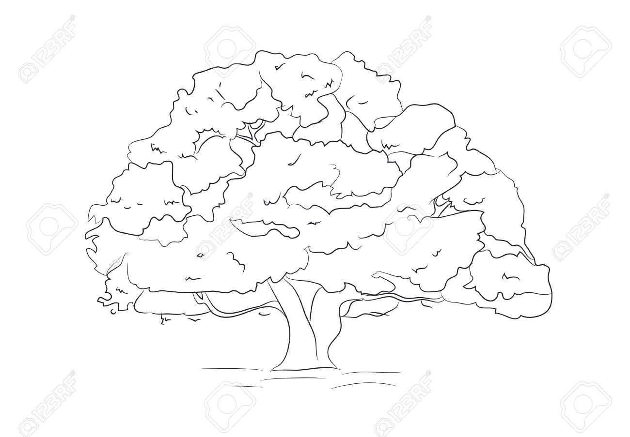 Big Tree Drawing Lines Vector Illustration Royalty Free Cliparts Vectors And Stock Illustration Image 111459852
