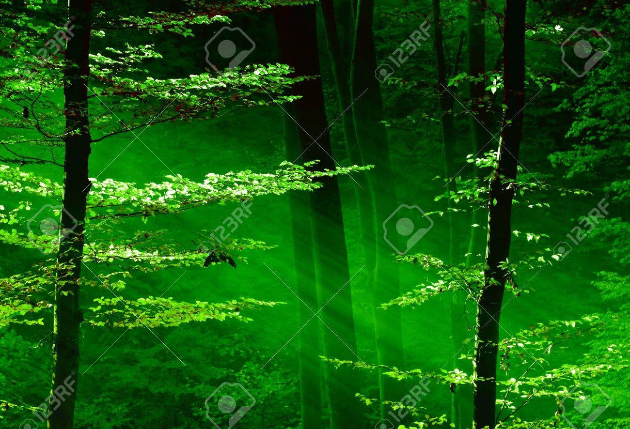 Lights of the forest Stock Photo - 15140175