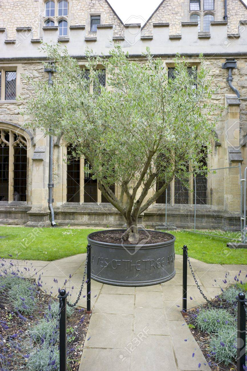Located In Oxford England The Olive Tree Was Donated And Bears - Where is oxford located