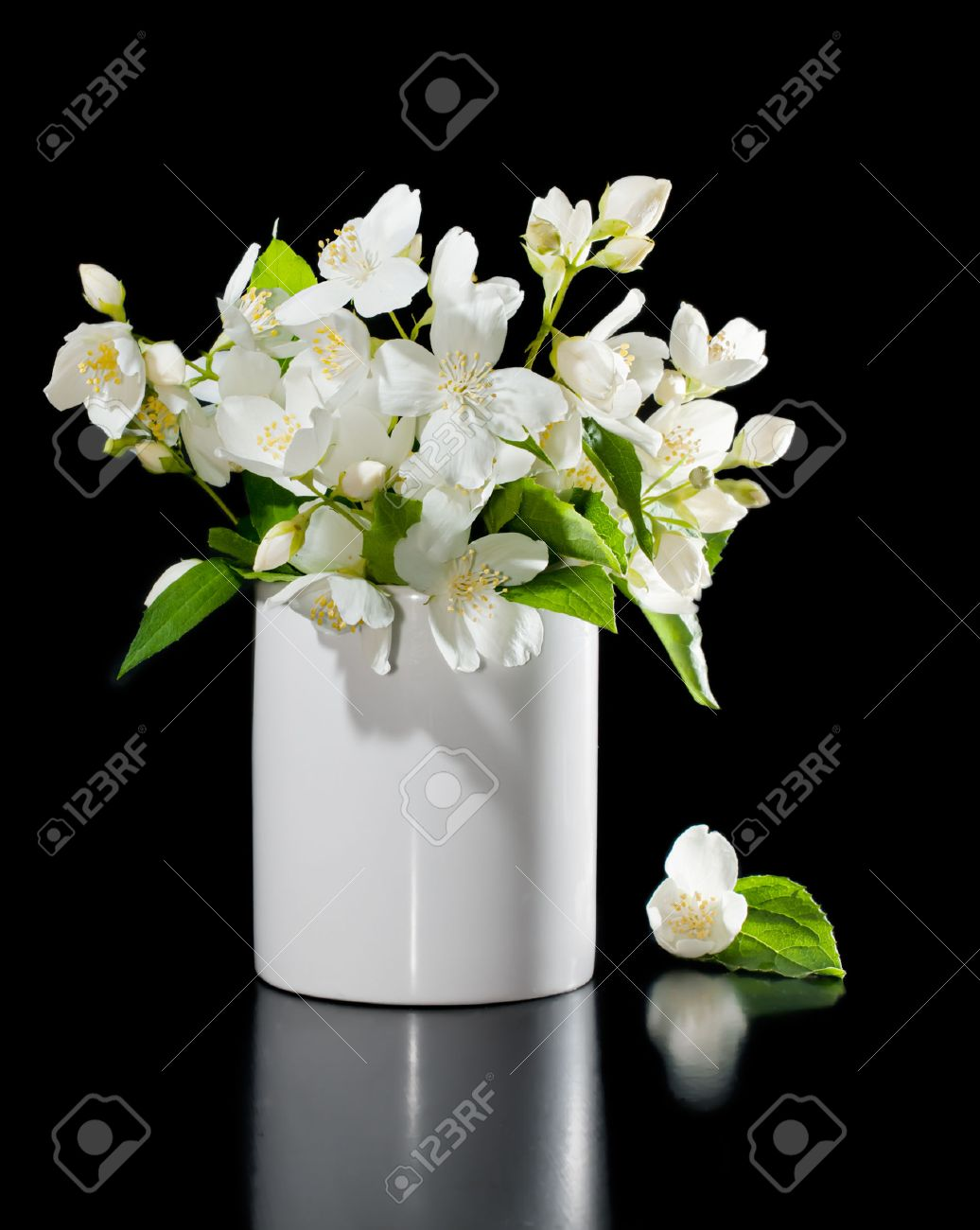 Bunch Of Jasmine Flowers On A Black Background With Reflection Stock