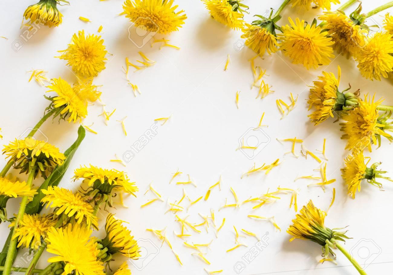 Flores De Diente De León Sobre Fondo Blanco Flores Amarillas
