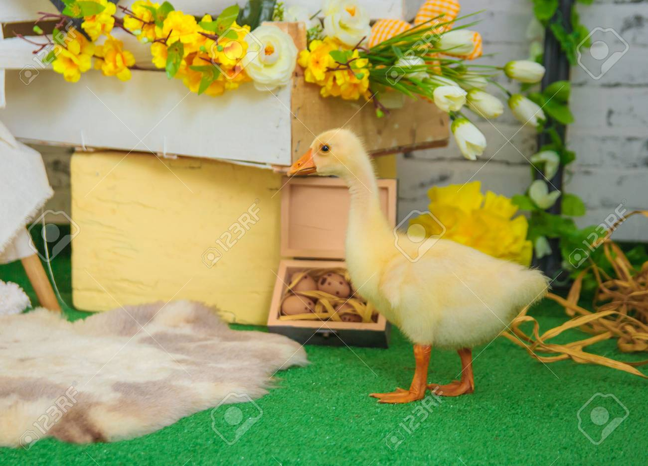One Baby Gosling In Easter Studio Decoration Lizenzfreie Fotos ...