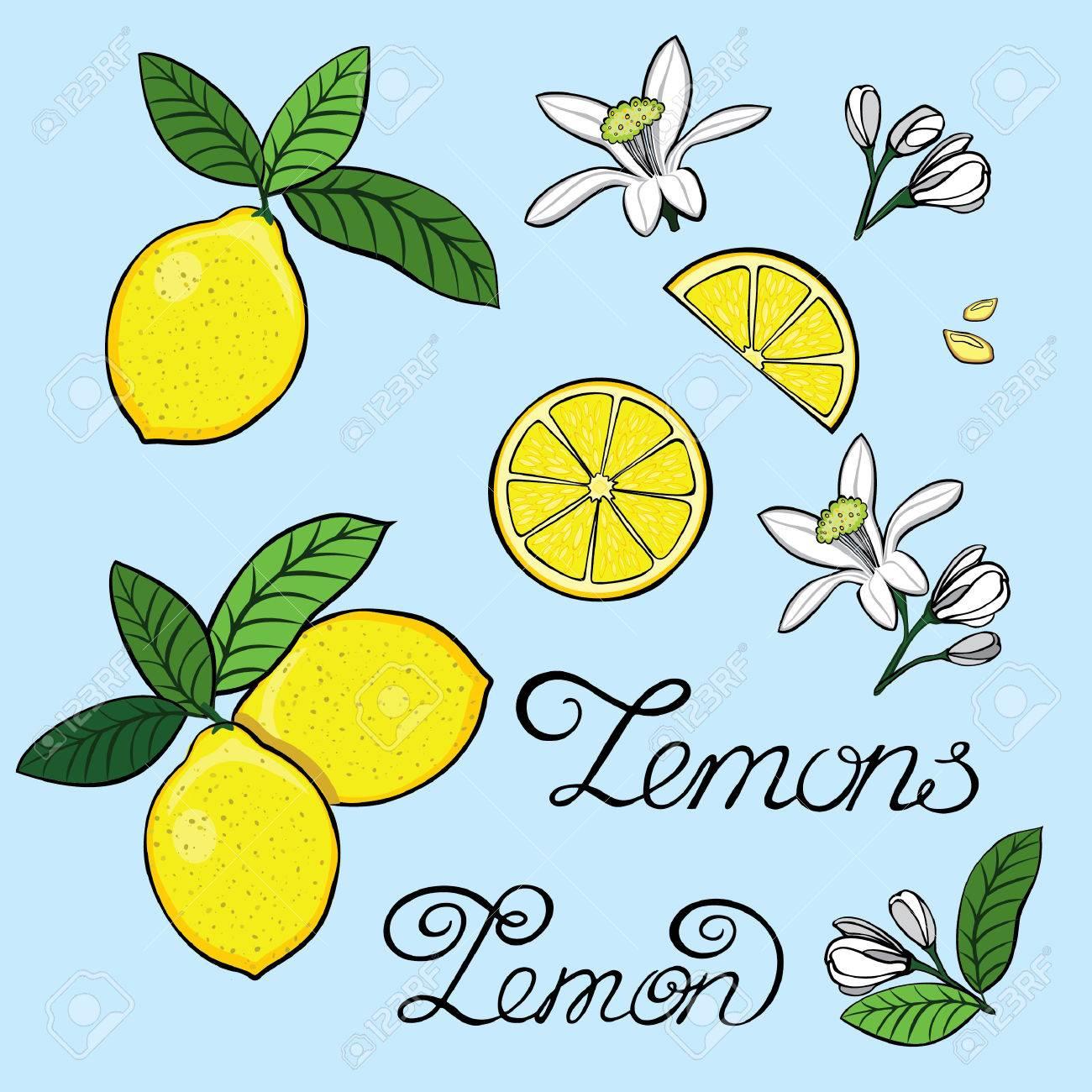 Elemente Für Das Design Einer Zitrone, Zitronenbaum Blumen, Getreide ...