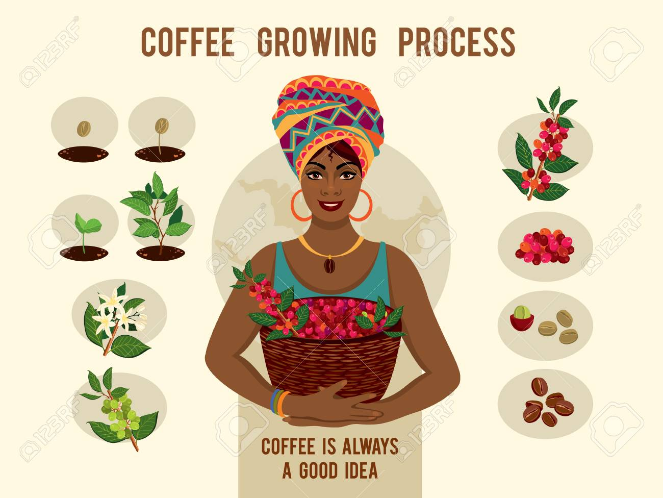 Poster with process of planting and growing a coffee tree. Beautiful woman is a coffee farmer with a basket of coffee berries. - 94598092