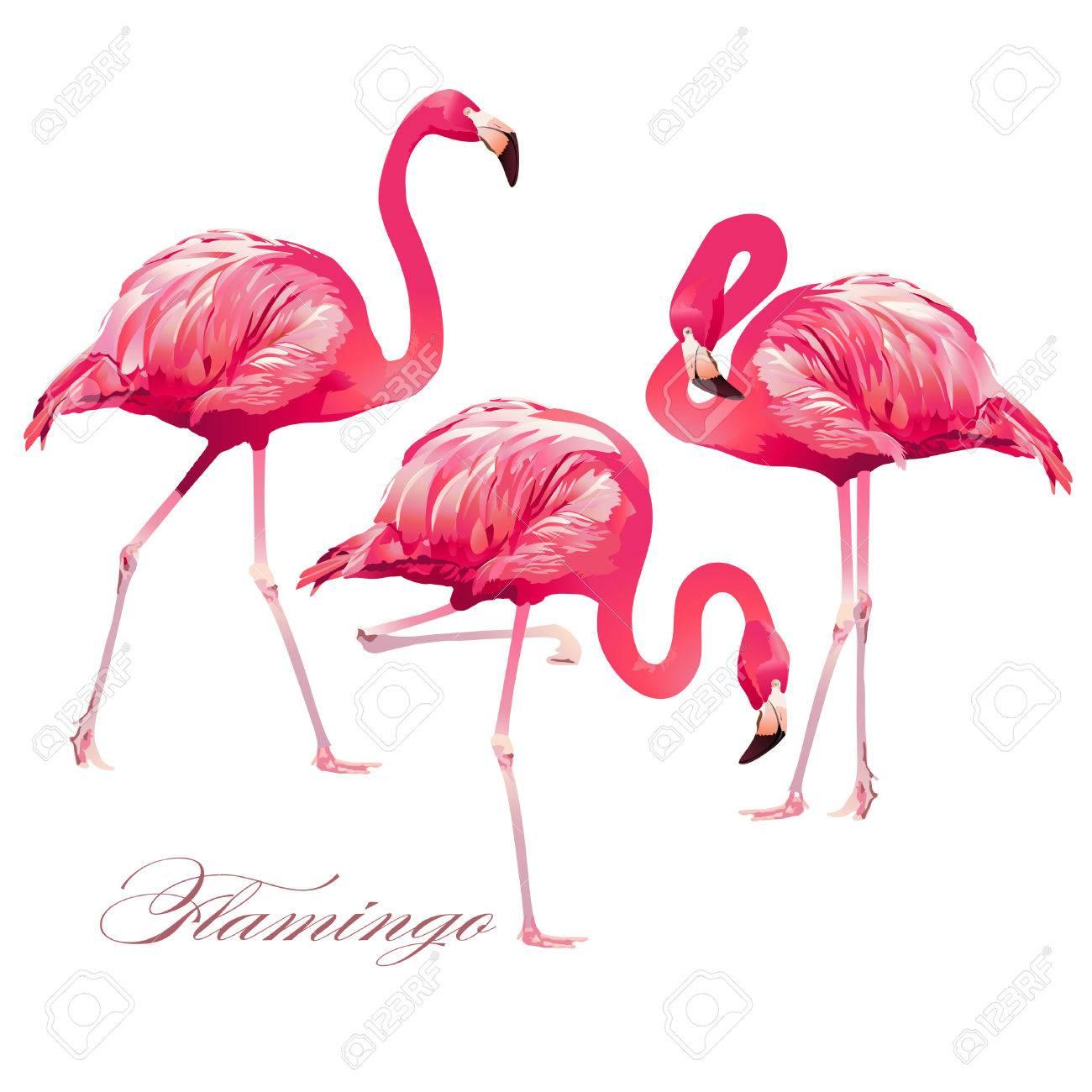 Tropical Bird Flamingos. Vector. - 74903416