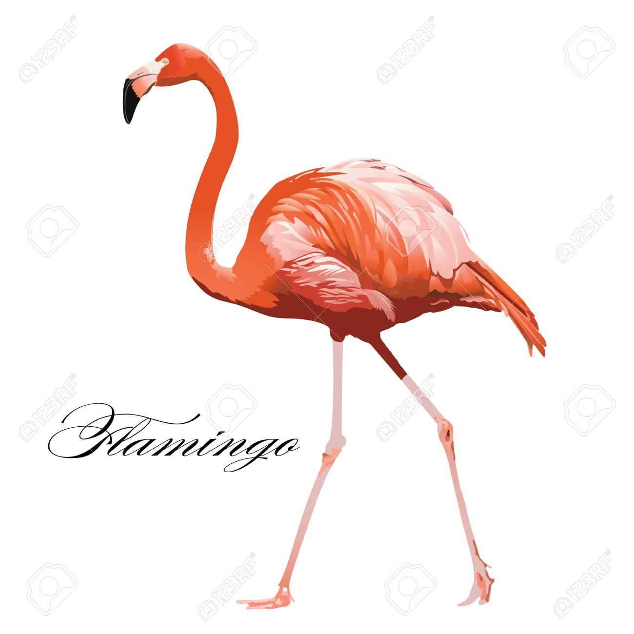 Flamingo tropical exotic coral bird Vector isolated Illustration. - 90853141