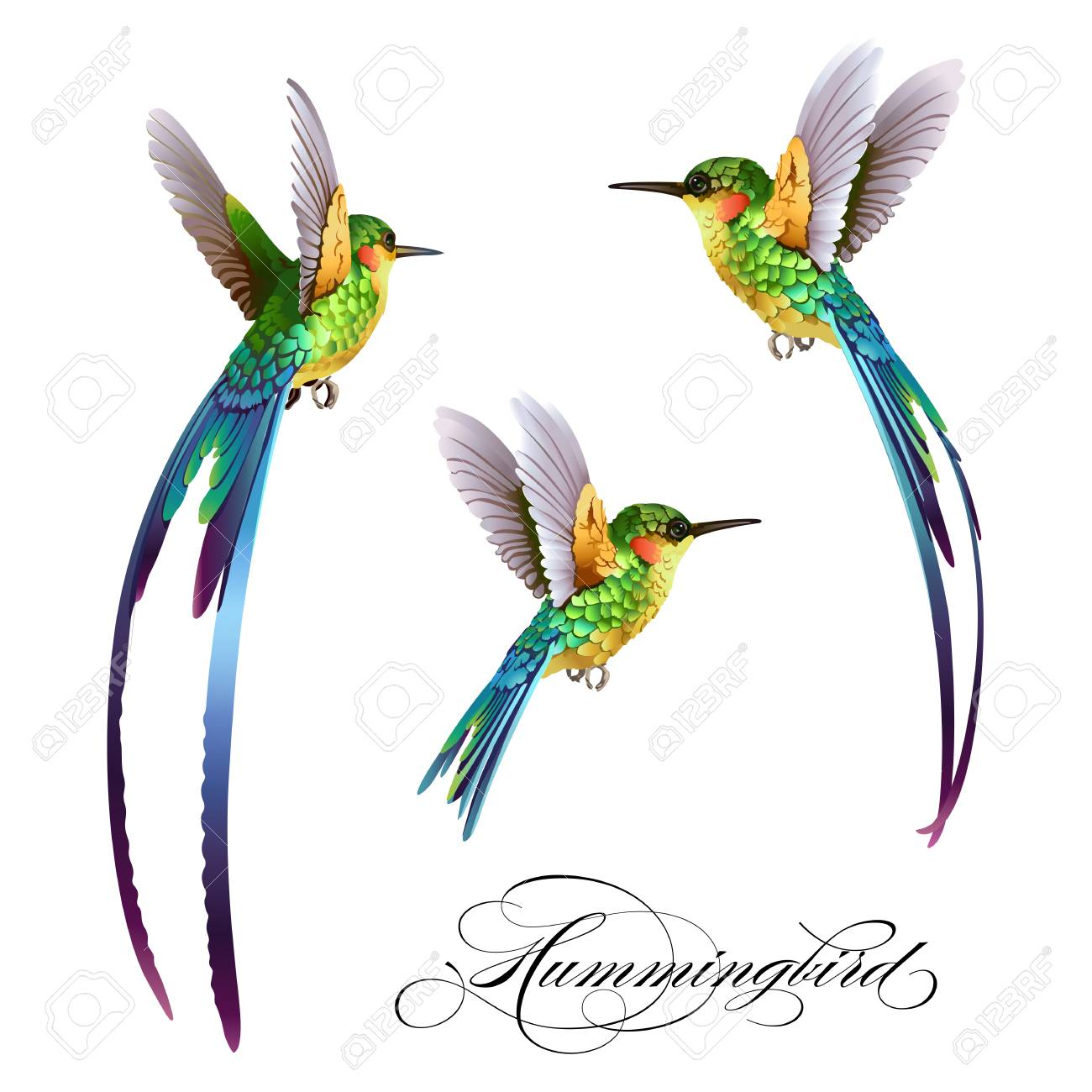 Hummingbirds set. Tropical seamless pattern with bird. - 91838127