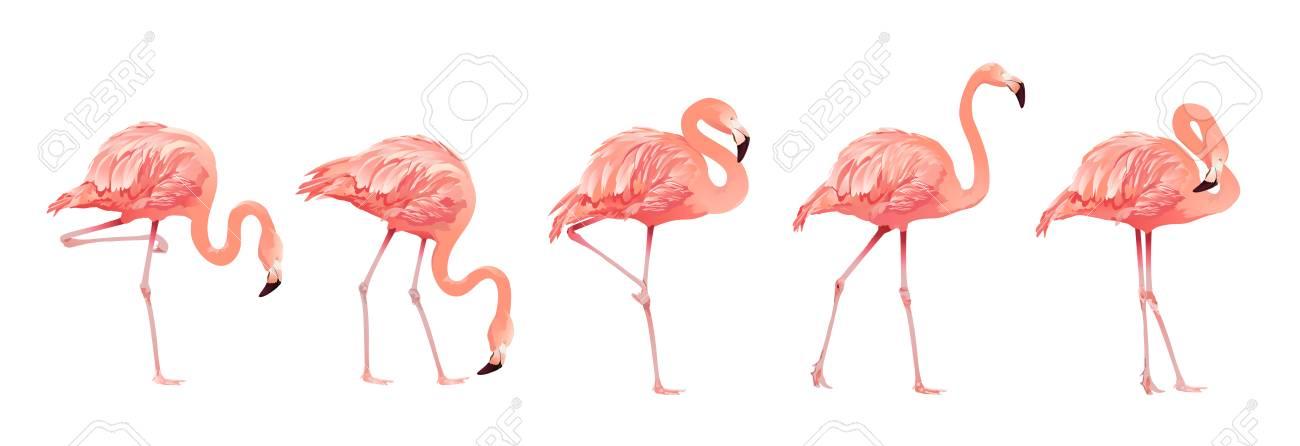 Pink Flamingo Bird Set Isolated on White Background. Vector illustration - 108528359