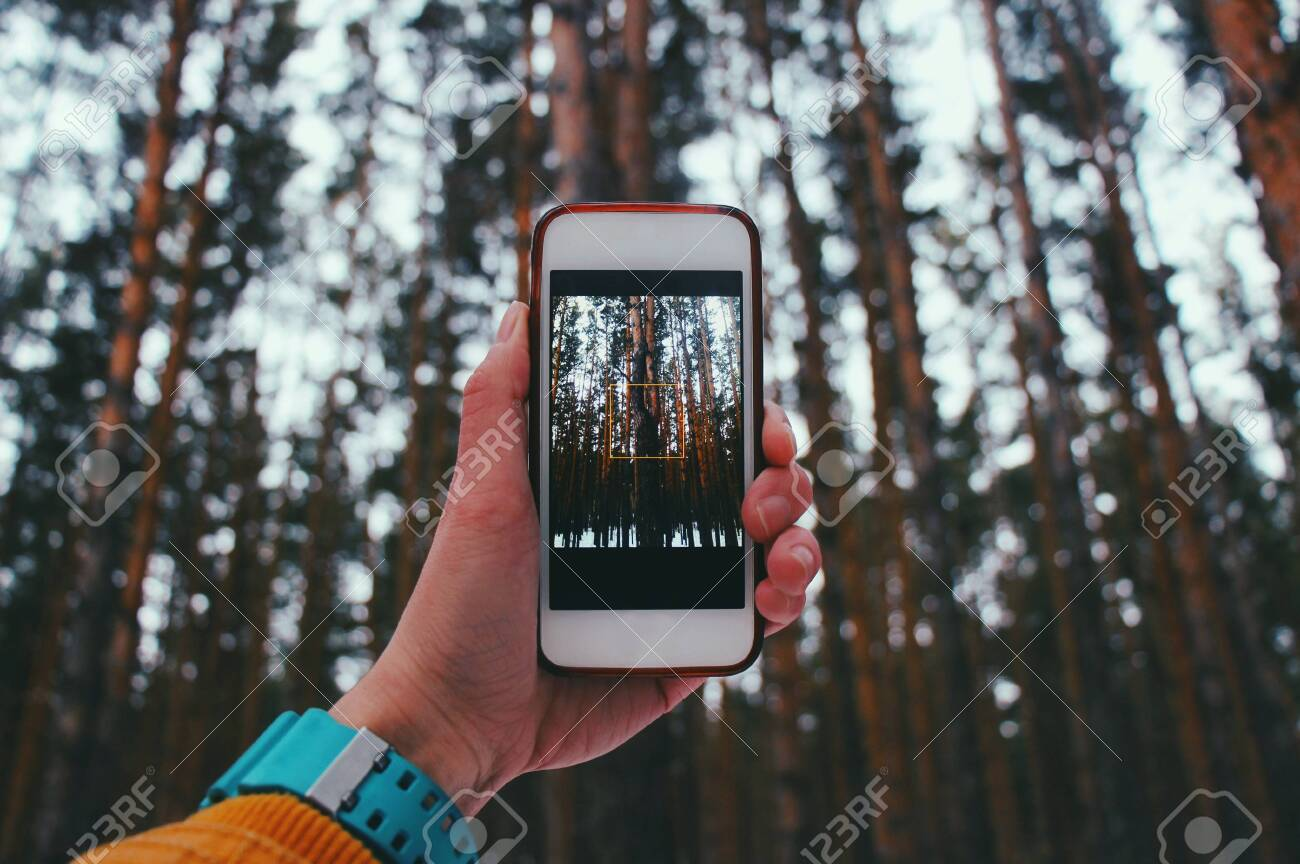 Holds the phone, takes pictures of the forest on the phone. - 94737140