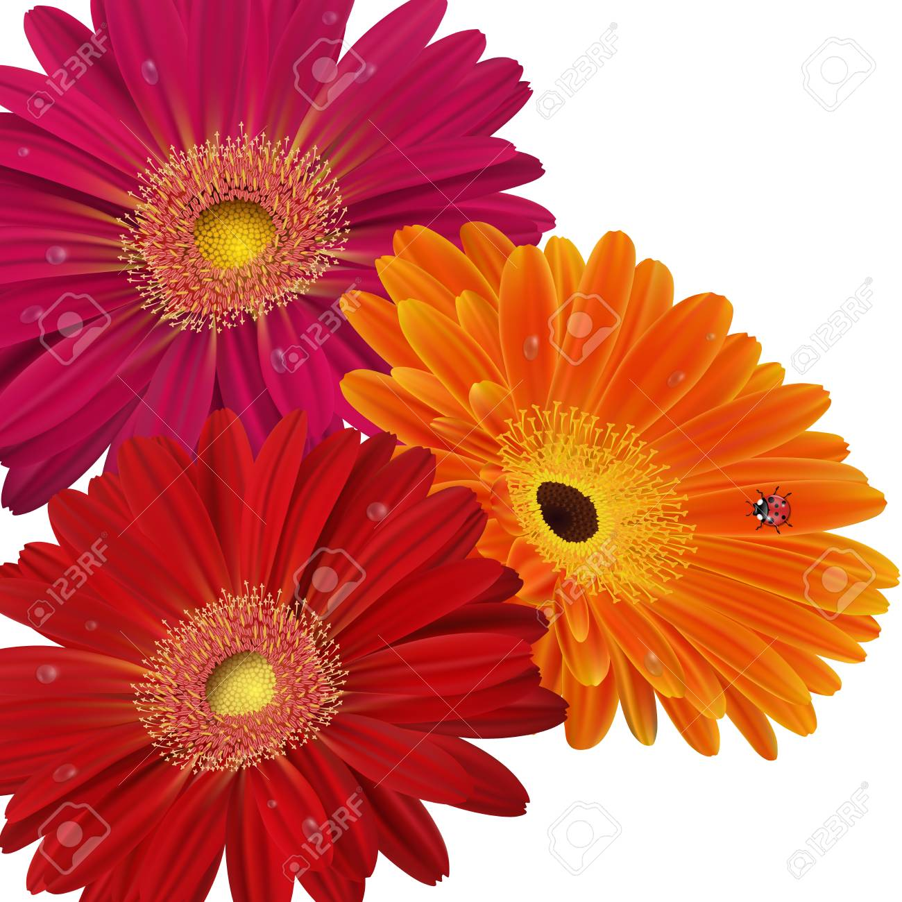 Illustration Of Greeting Or Invitation Card Template With Gerbera ...