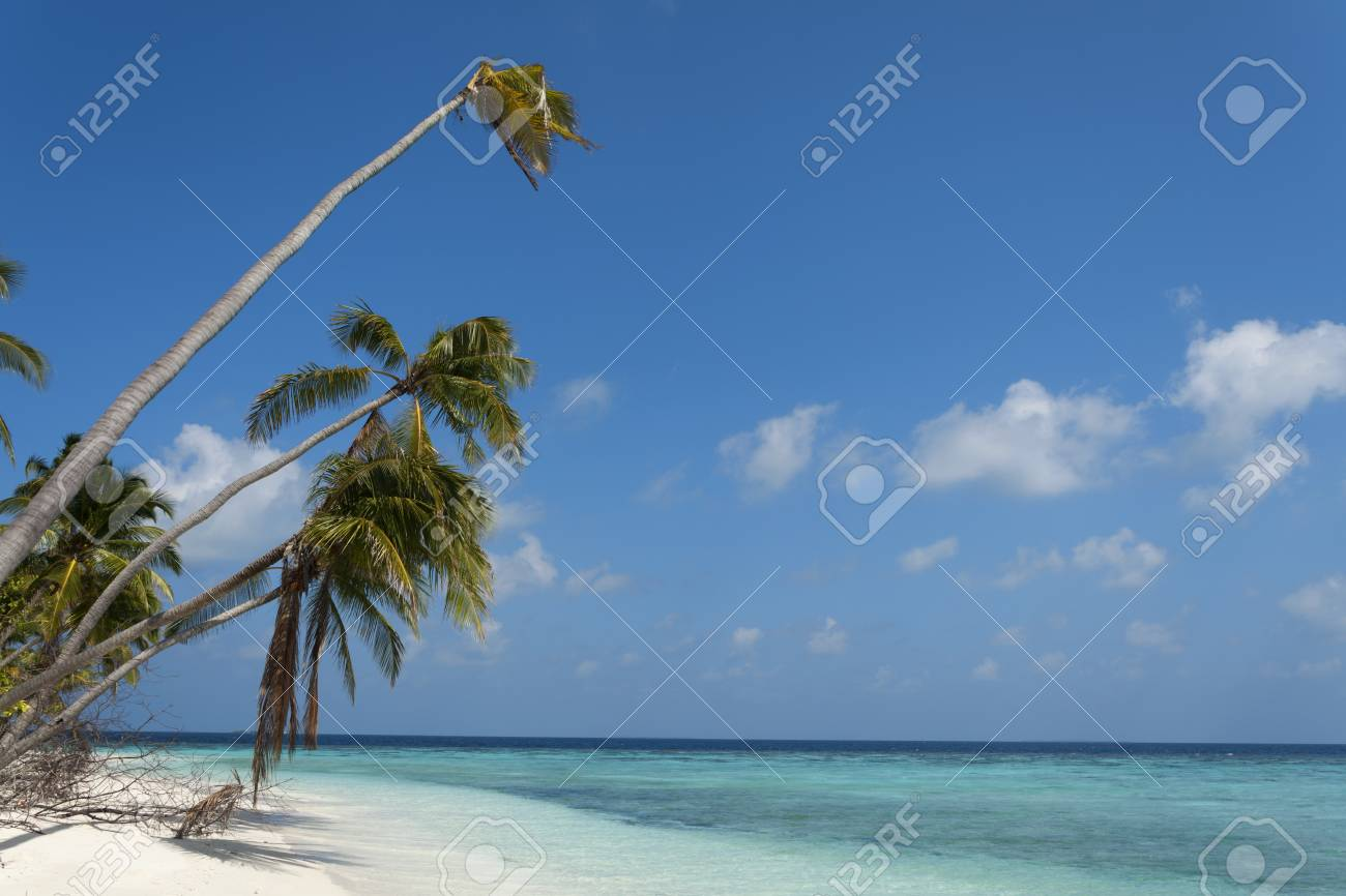Tropical Island Palm Sea And Sky Maldive Stock Photo Picture And