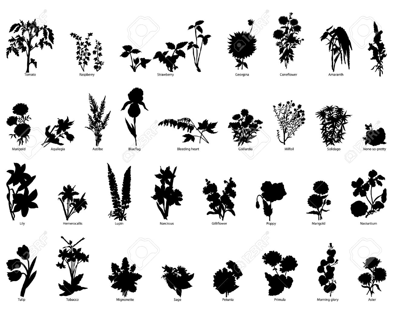 Collection of different garden vector silhouettes of plants Stock Vector - 4183498