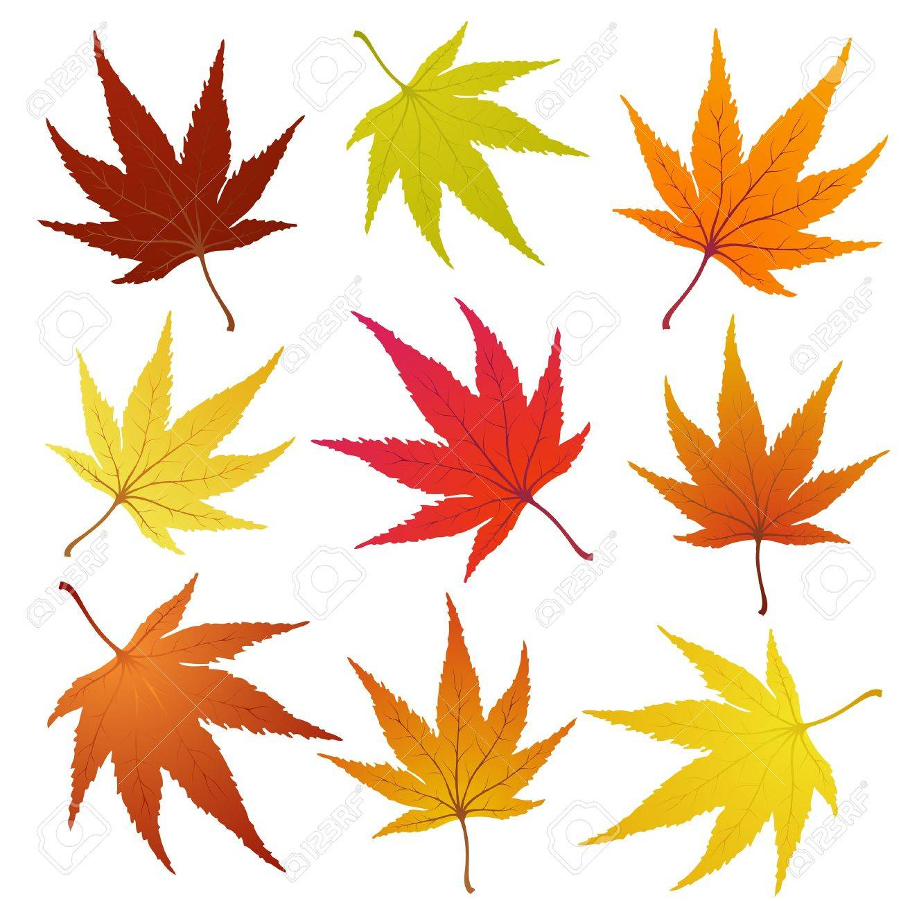 Set of of autumn  maples leaves.  illustration. Stock Vector - 7763525