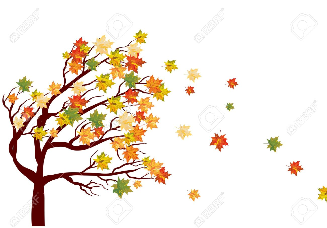 Autumn maple tree with  falling leaves. illustration. Stock Vector - 15014469