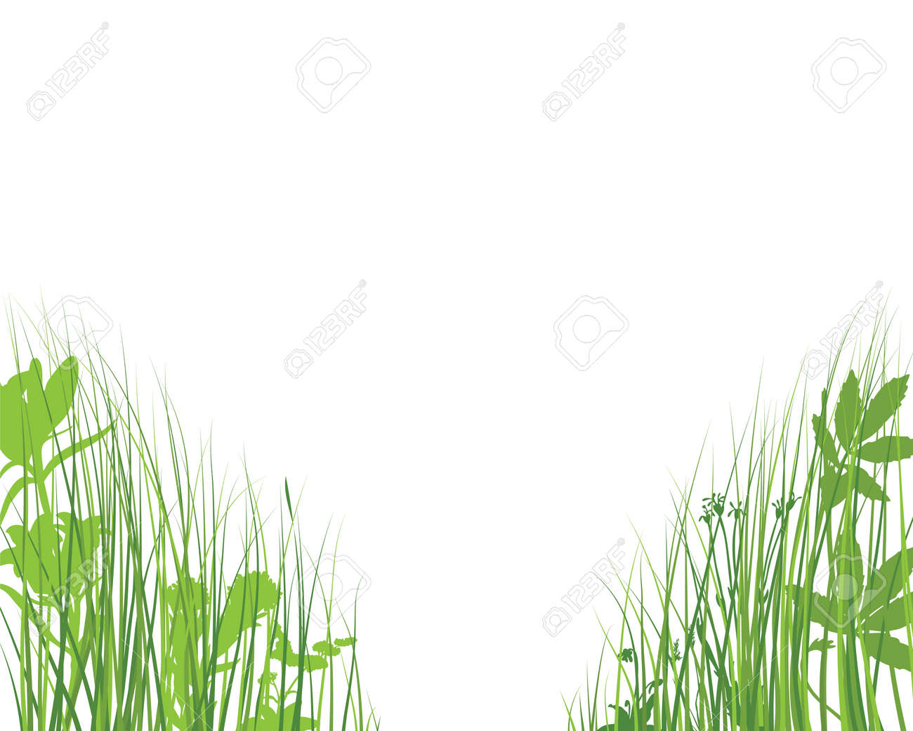 Green spring meadow grass. Fresh color plants, seasonal growth grass, separated botanical elements, herbs. Natural lawn bushes, floral border. Vector Illustration. - 167414797
