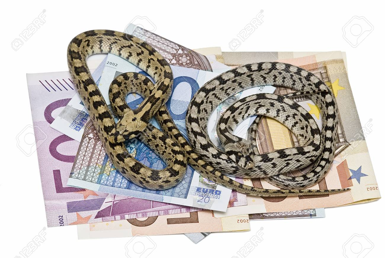 Two snakes on a lot of money. Stock Photo - 7128443