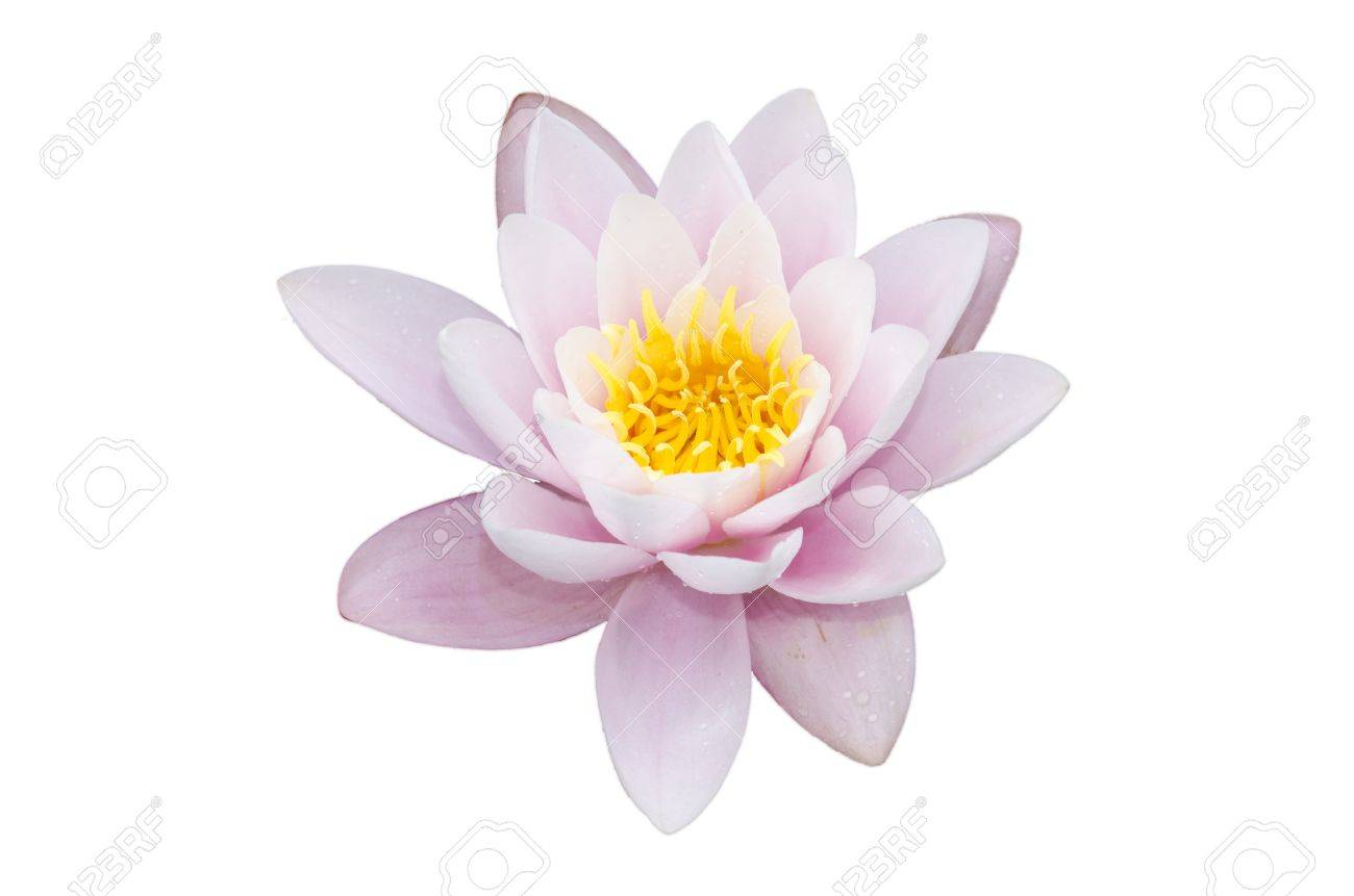 Yoga pattern background seamless pattern with five petals lotus flower - White Lotus Flowers Lotus Flower Isolated On A White Background