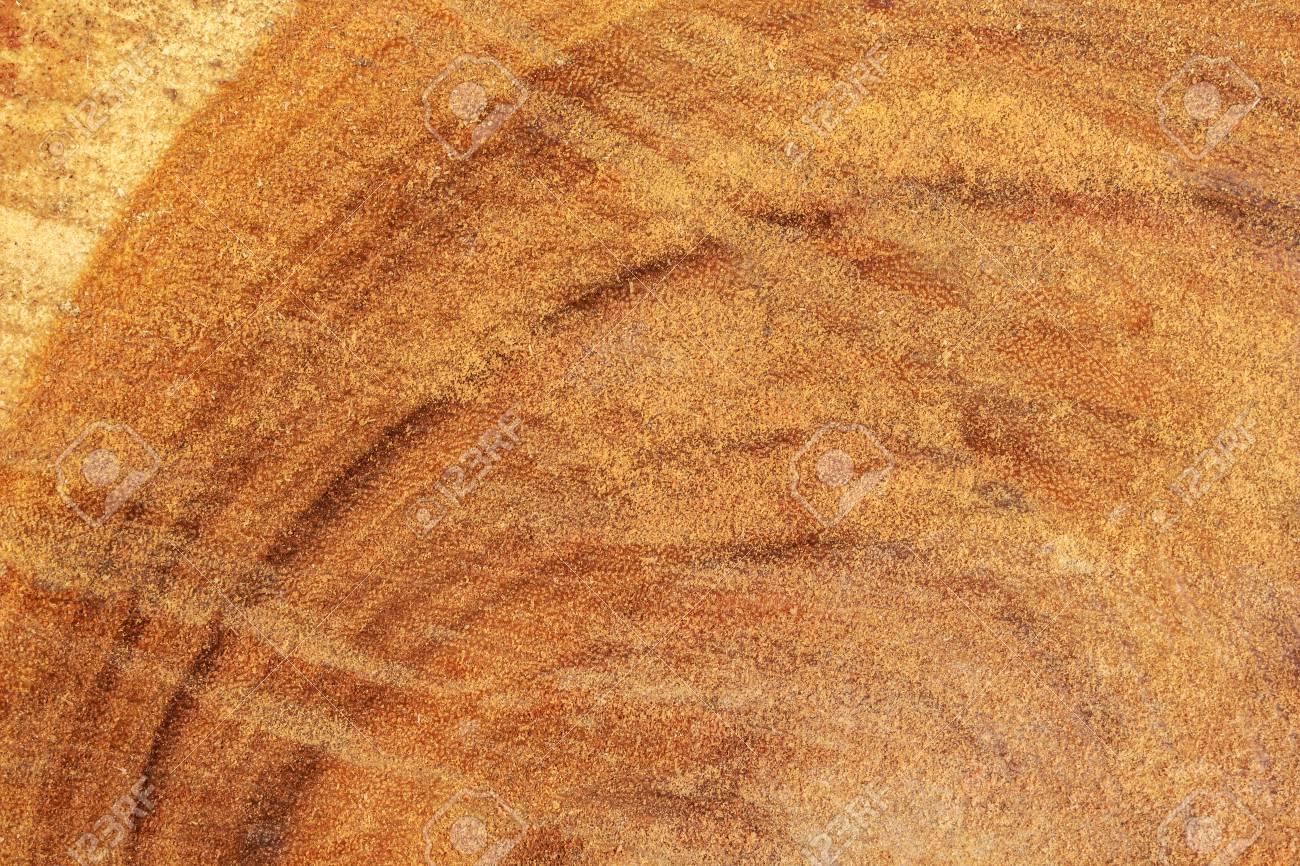 tree texture cut wood pattern ring inside tree trunk