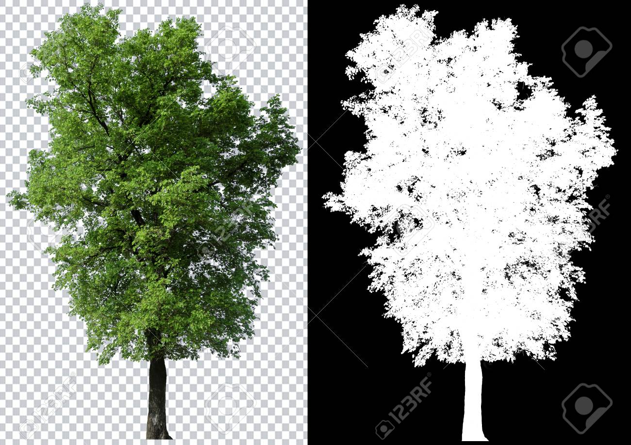 single tree on transparent picture background with clipping path, single tree with clipping path and alpha channel on black background - 119819590