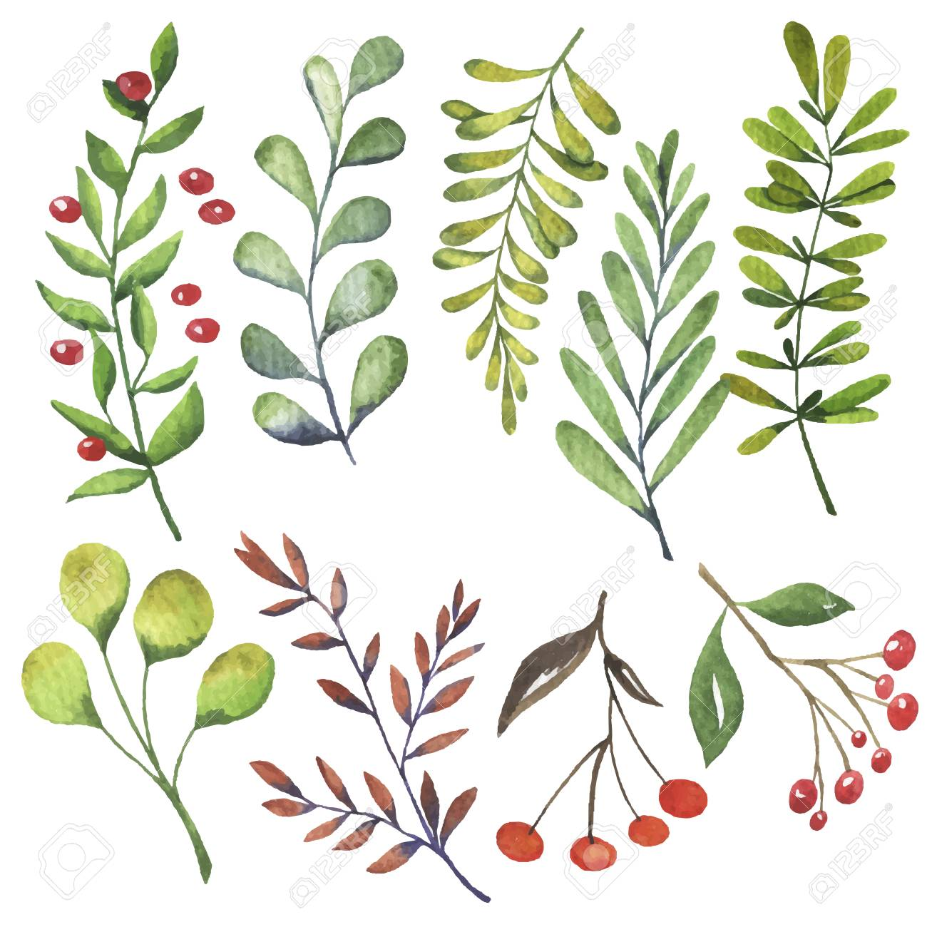 Green leaves and autumn berries set painted by watercolor. Hand drawn illustration. - 104462611