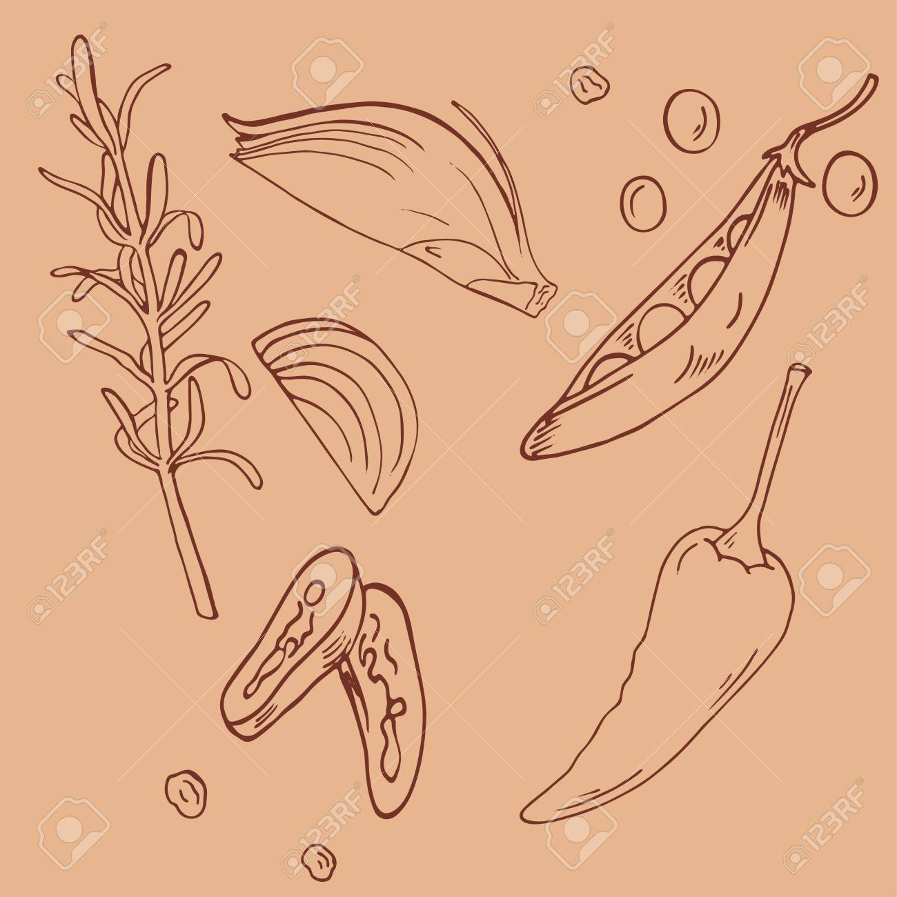 Set of fresh vegetables: onion, green pees, chili, rosemary isolated on beige background. hand drawn vector illustration. - 117187152