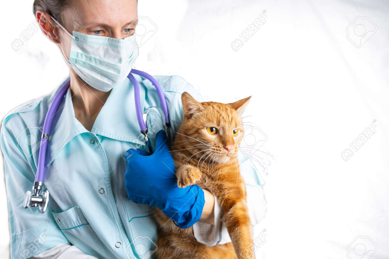 A veterinarian holds a bright red cat in his arms. Animal Health Concept - 171995716