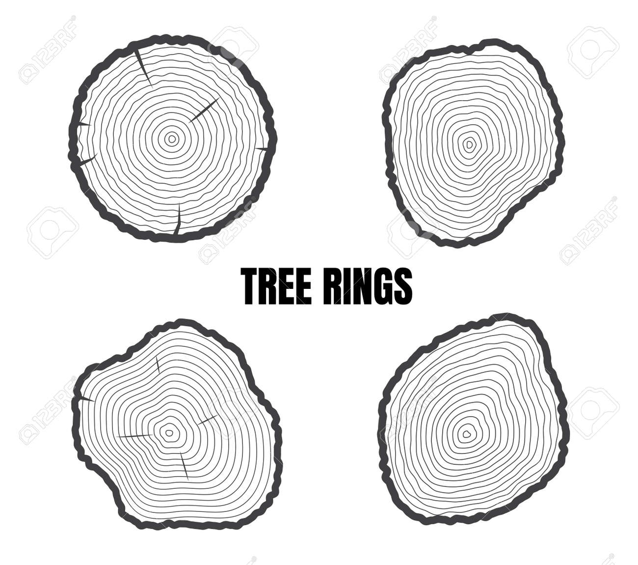Collection of tree rings isolated on white background - Vector illustration - 152783146