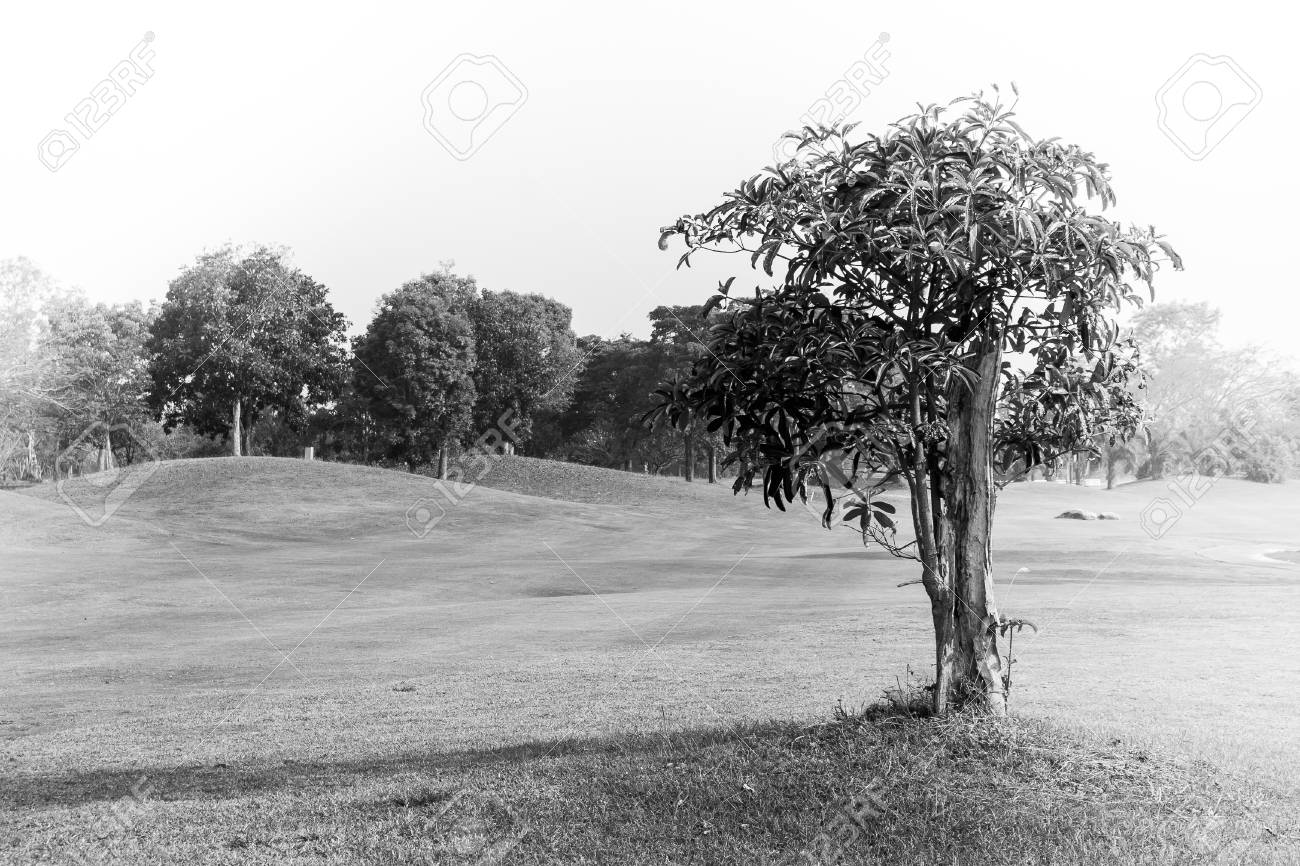 Abstract Black And White Image Alone Tree In Golf Course Field Stock Photo Picture And Royalty Free Image Image 96722274
