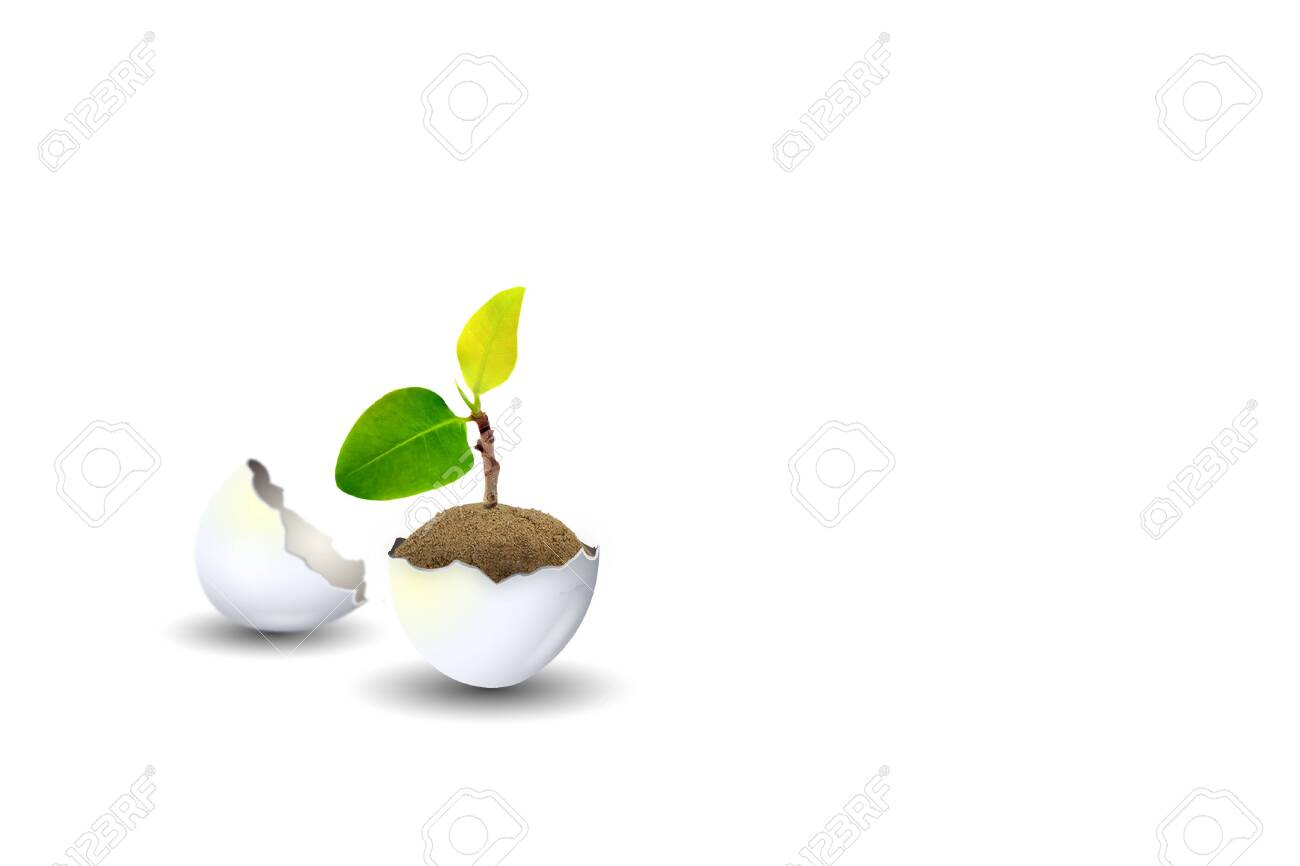 New Life Concept : Little sprout green tree growth in eggshell isolated on white background. - 120044709