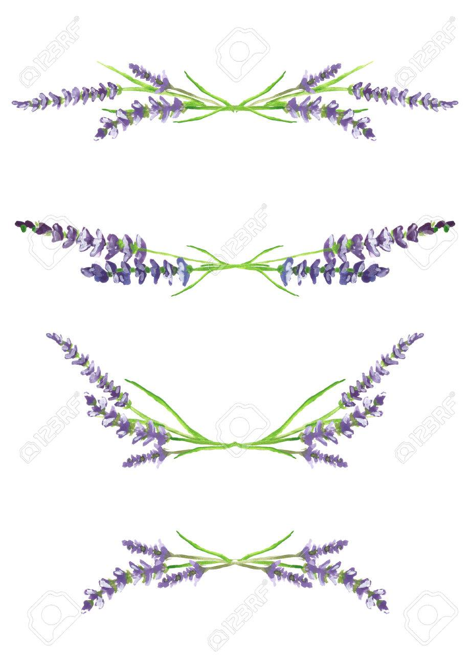 watercolor hand painted lavender branches, scanned and isolated on white background, design elements, illustration - 51465034