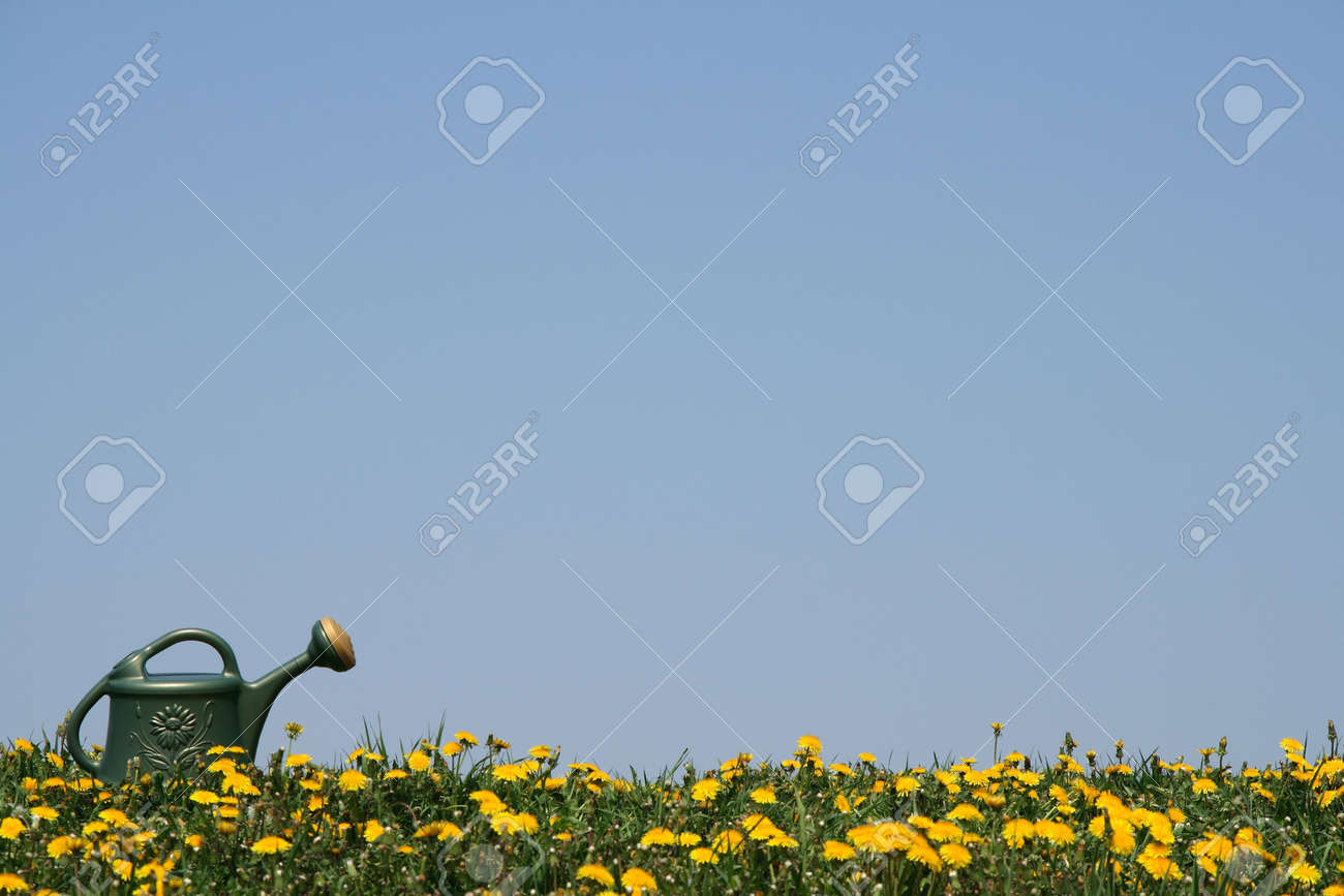 Green watering-can in a flowering spring meadow. Stock Photo - 1000185