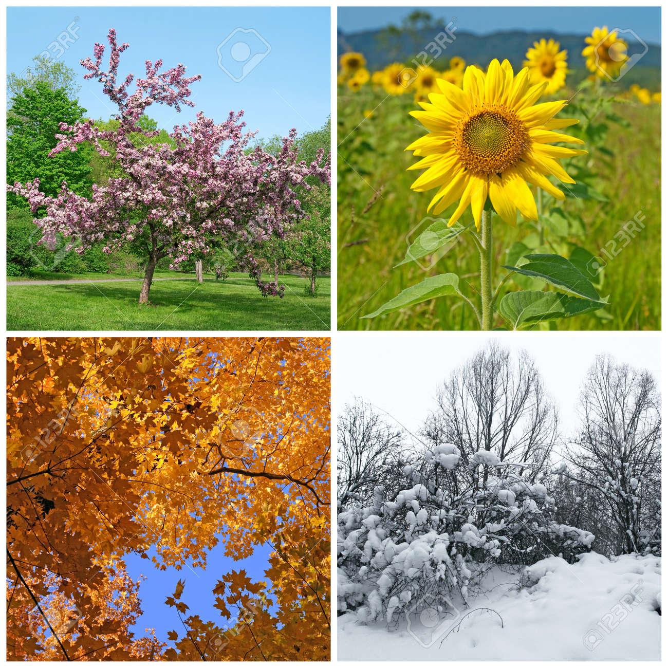 3d9b1ed4c9 Die vier Jahreszeiten Frühling, Sommer, Herbst und Winter Landschaften  Standard-Bild - 12972876