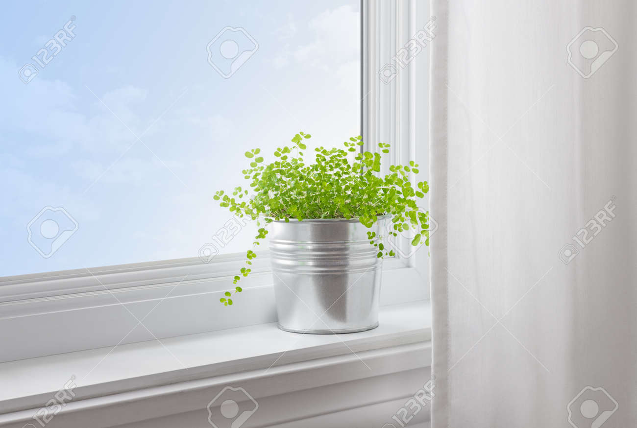 Modern window sill - Green Plant On A Window Sill In A Modern Home Stock Photo 18248691