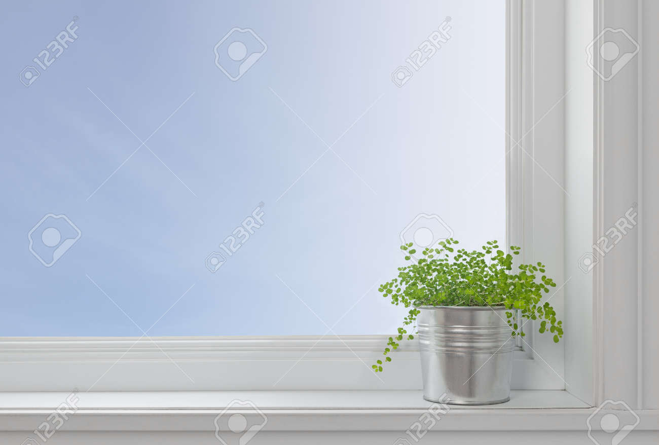 Modern window sill - Green Plant On A Window Sill In A Modern Home With Blue Sky Seen