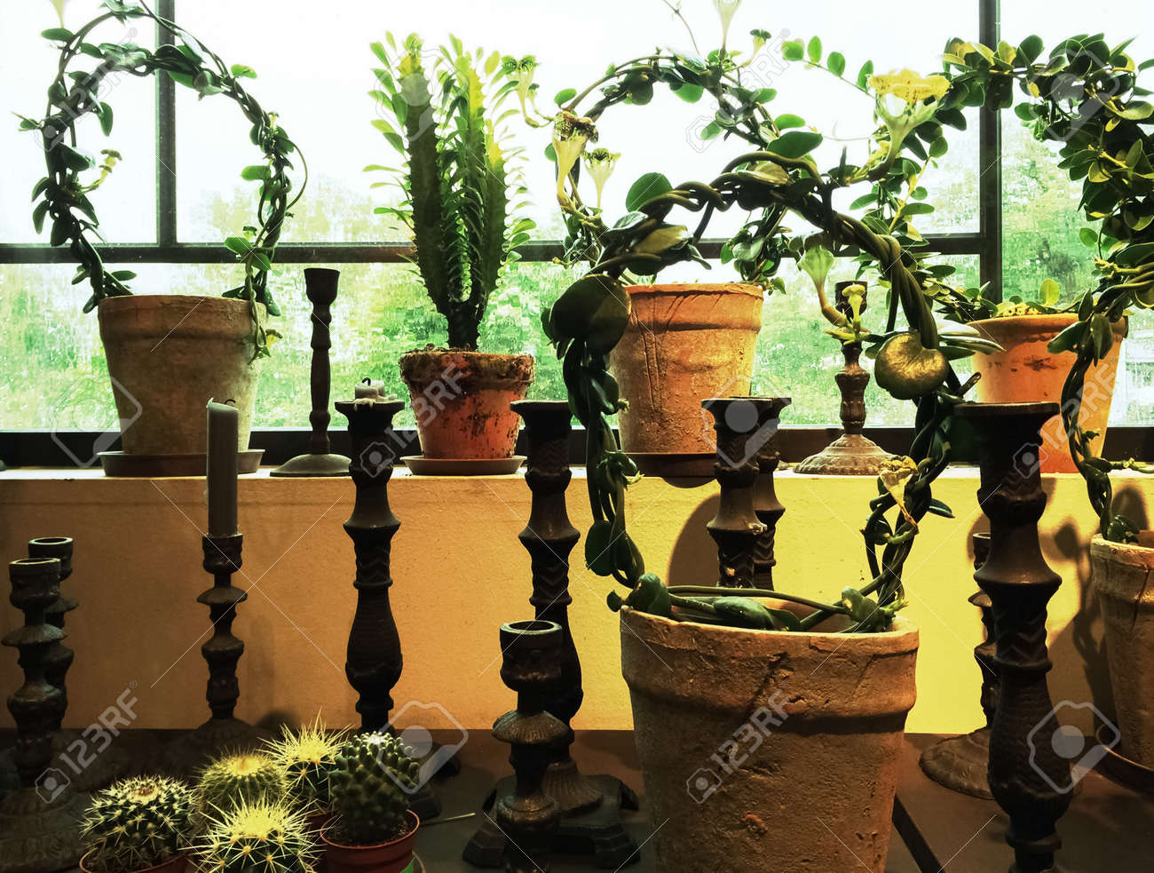Candles and green plants in clay pots decorating a window.