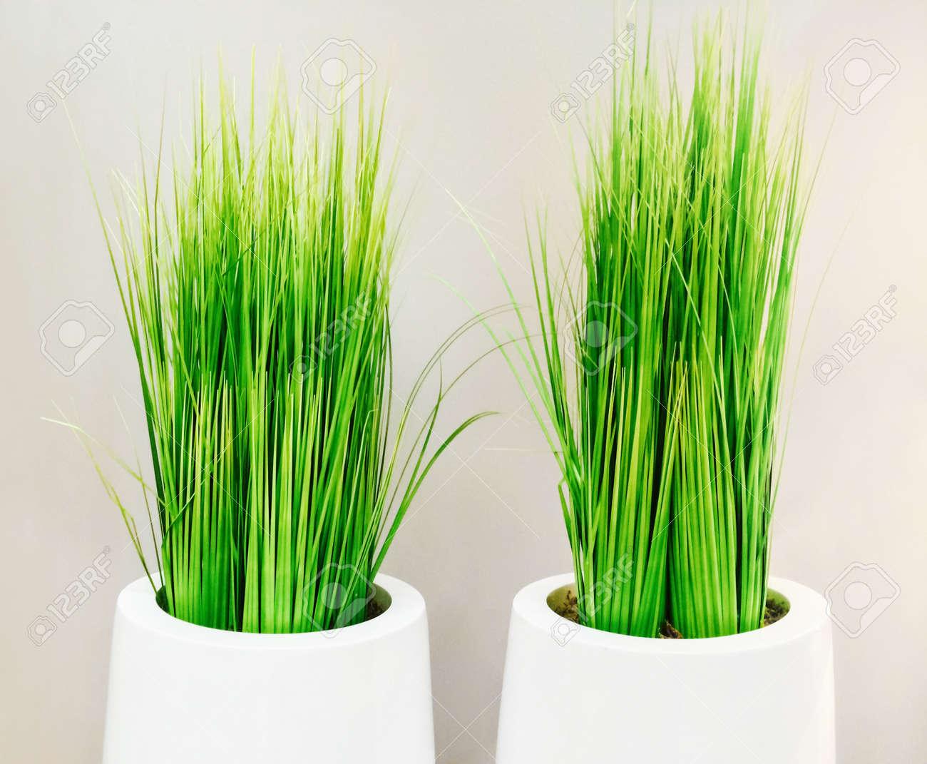 Dekorative Grüne Gras In Weiße Vasen. Moderne Wohnkultur ...