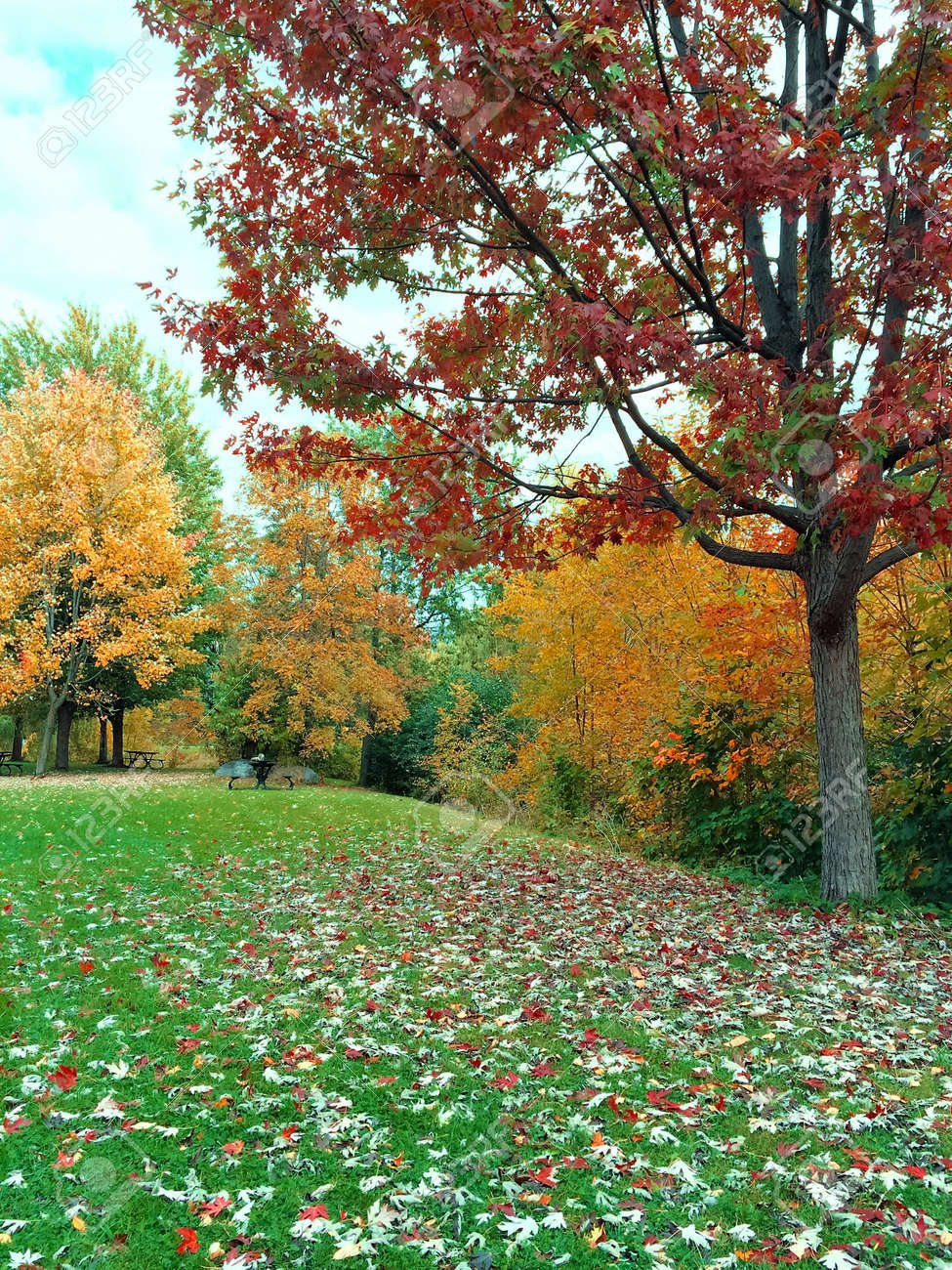 Autumn Landscape With Green Lawn And Colorful Trees. Quebec,.. Stock ...