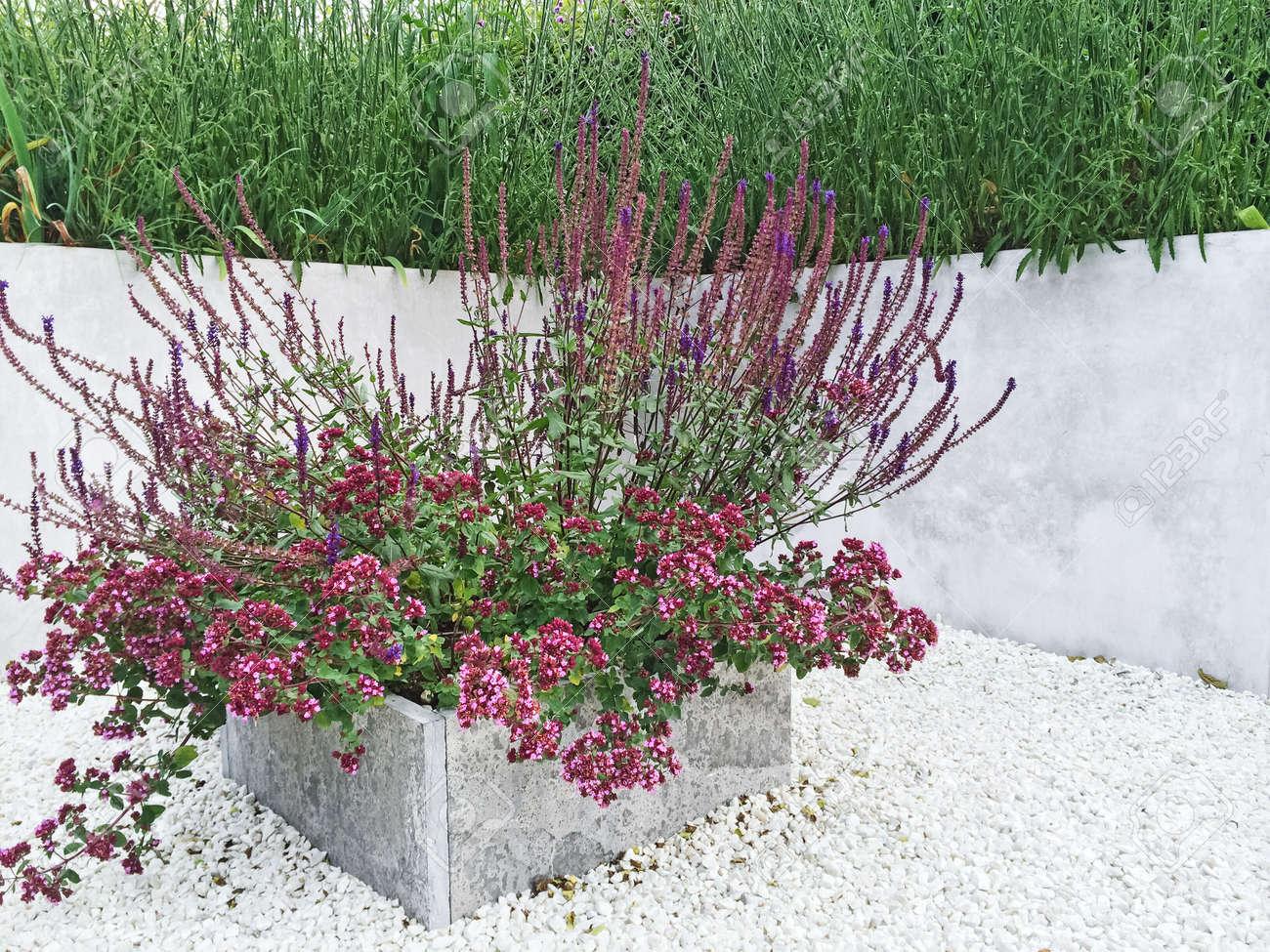 Parterre De Fleurs Avec Des Fleurs Pourpres. Détail D\'un Jardin Avec ...