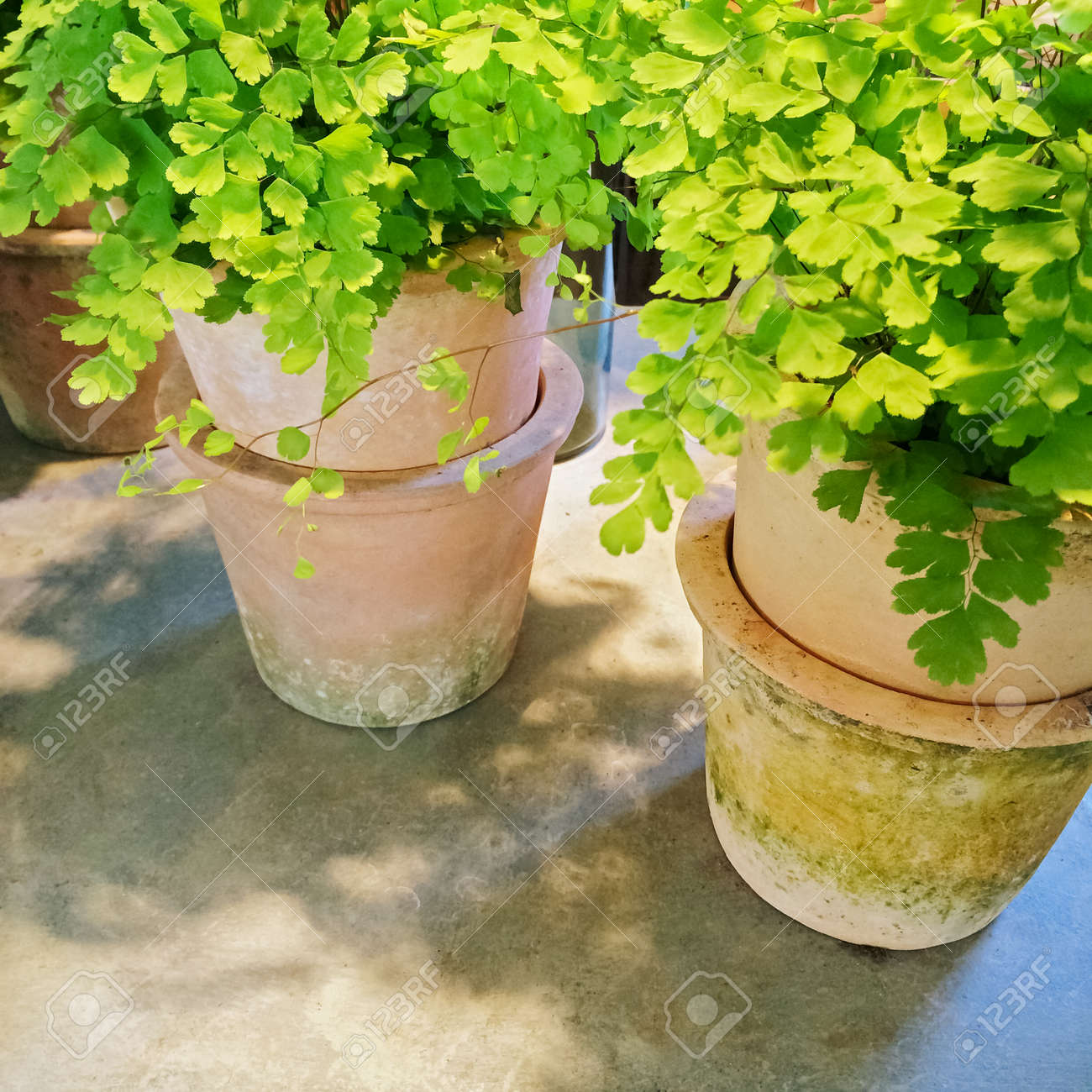 Green Plants In Clay Pots, Under Sunlight. Garden Decor. Stock Photo ...
