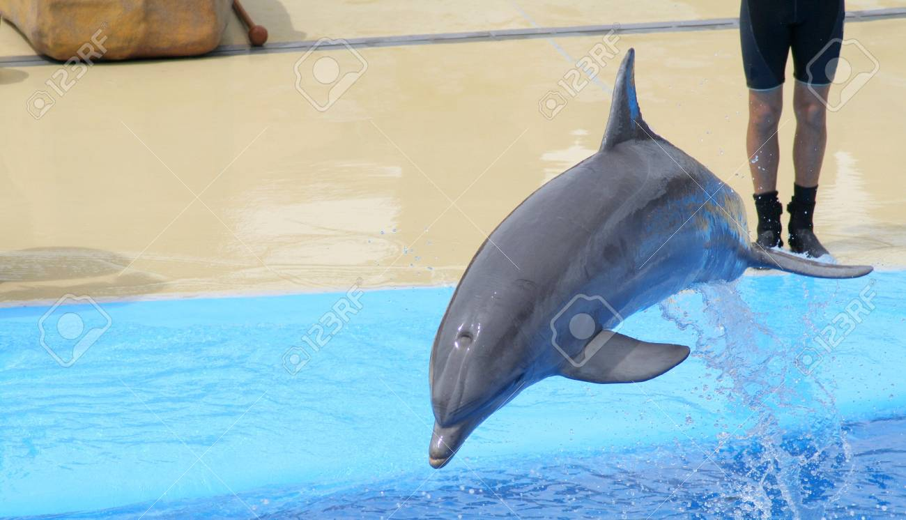 dolphins jumping somewhere in Spain Stock Photo - 10753639