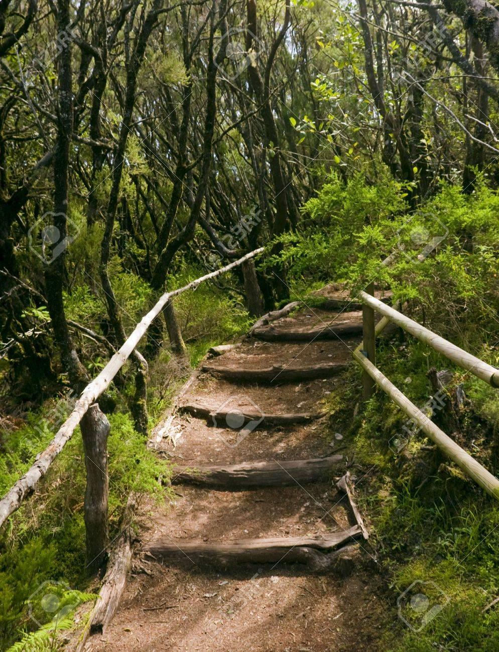 the amazing rain-forest in La Gomera, Parque Nacional de Garajonay, Canary islands, Spain Stock Photo - 13929410