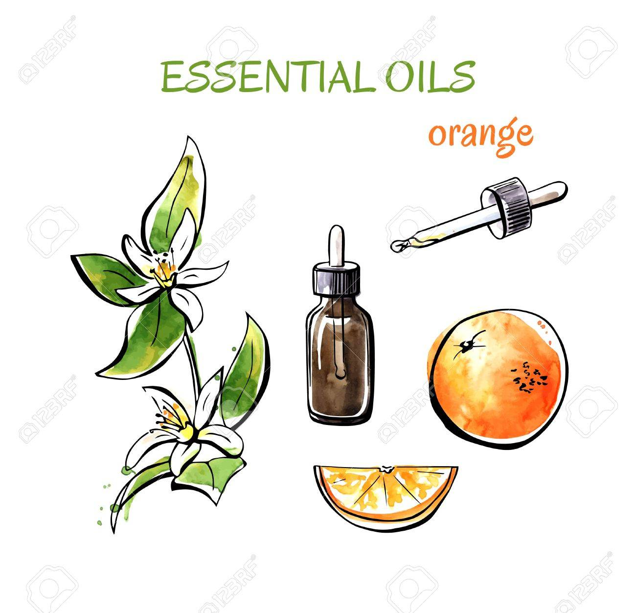 Vector illustration of orange essential oils. Branch with flowers, fruits, flasks and bottles. Set of hand drawn watercolor objects isolated on white background. - 61262323
