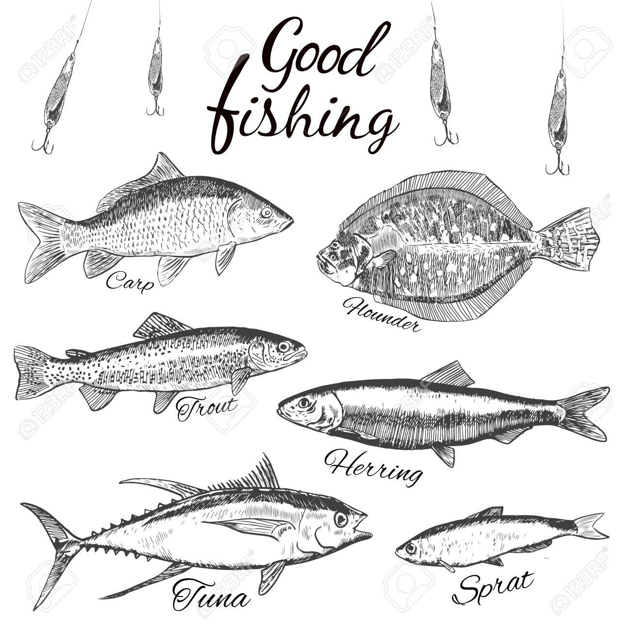 good fishing hand drawn sketch fish flat design modern vector