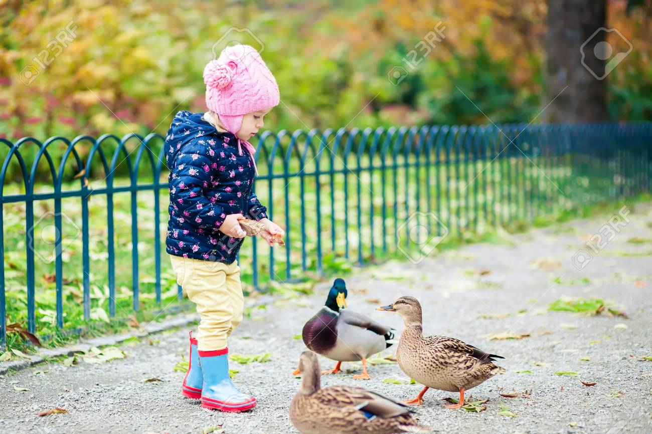 Little Girl Feeding Ducks Bread In The Autumn Park Stock Photo