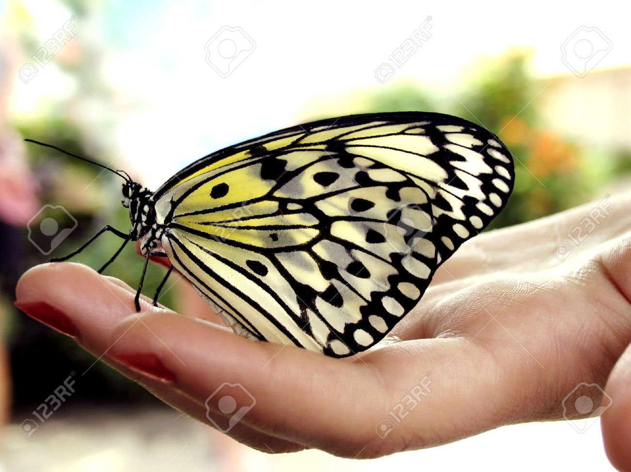 Butterfly resting on woman's hand Stock Photo - 3647219