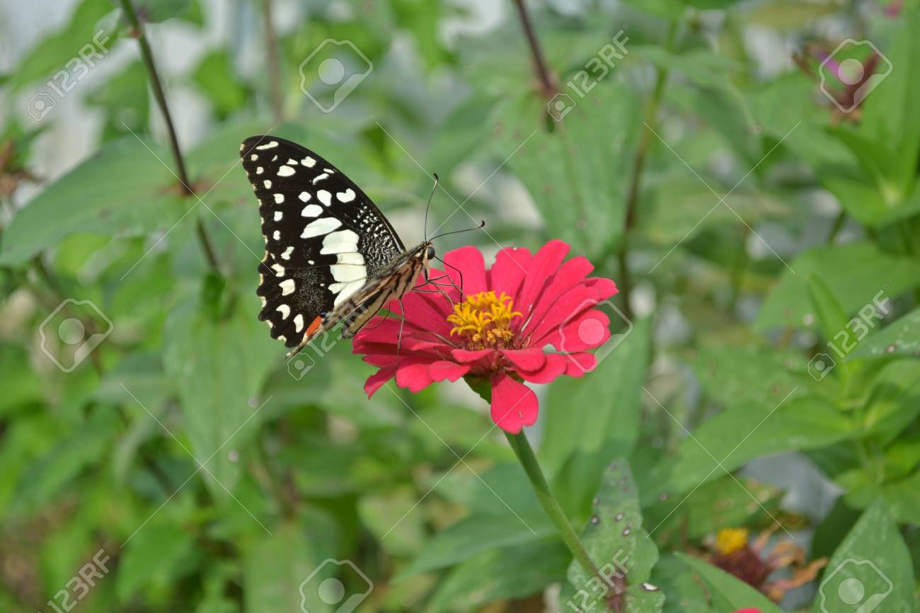 Closeup Of Colorful Butterflies On Flowers Stock Photo Picture And