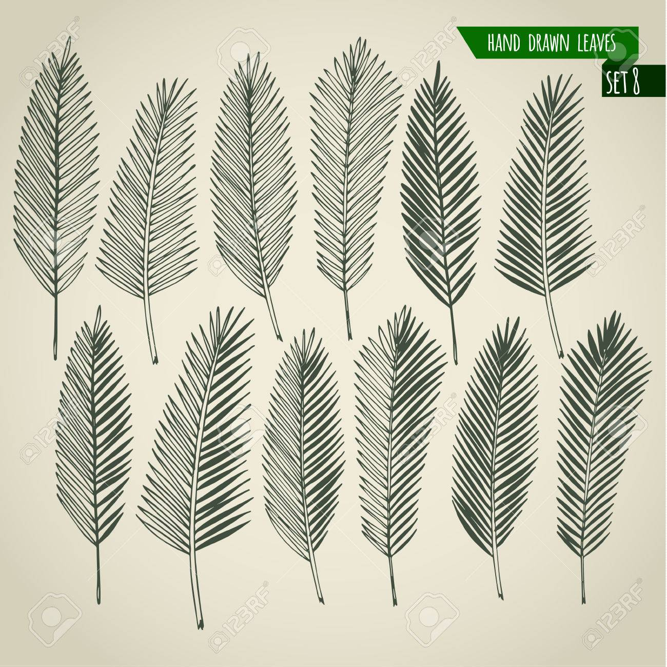 Set of hand drawn tropical palm leaves. Vector illustration. - 40169615